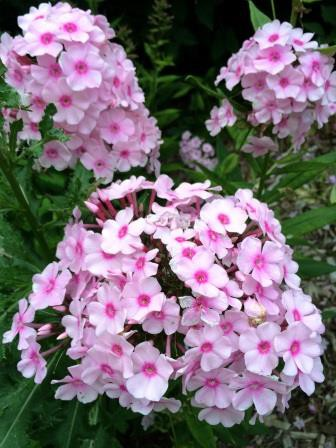 These pink petals look like they belong in a vase in a Laura Ashley bedroom.