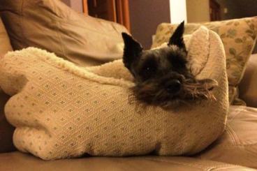 chloe in new bed