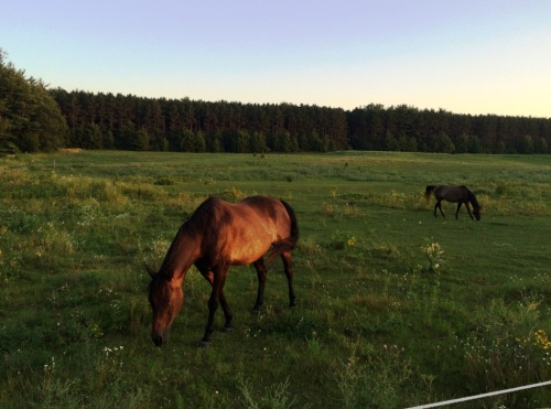 horses back yard