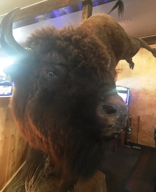 buffalo june 9