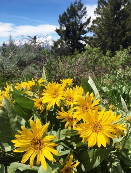 grand-teton-flowers.jpg