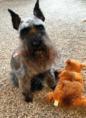 chloe with stuffed toy
