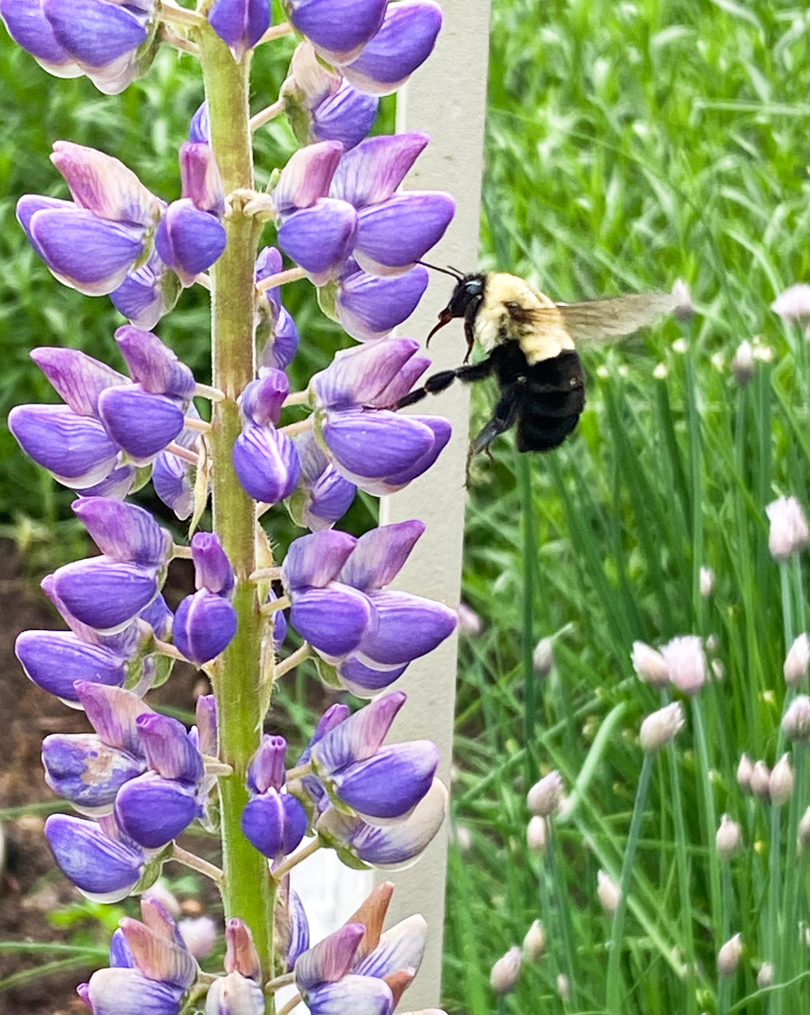 2020.06.09 bee