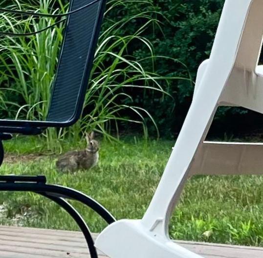 2020.07.16 rabbit close